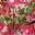 raphael florent makuela mavungu
